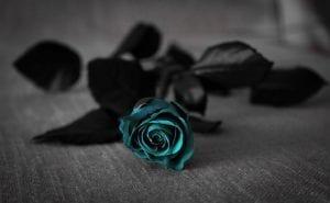 türkise Rose