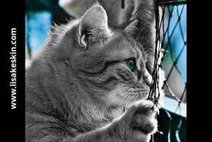 Katze maschendrahtzaun