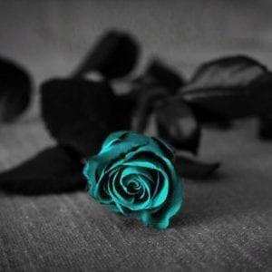 rose türkis