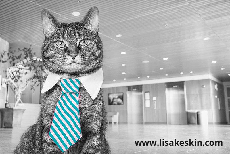 katze krawatte büro