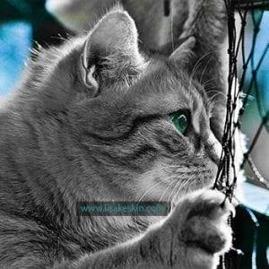 Katze Zaun